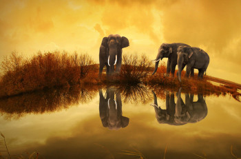 Beautiful elephants enjoying the sunset