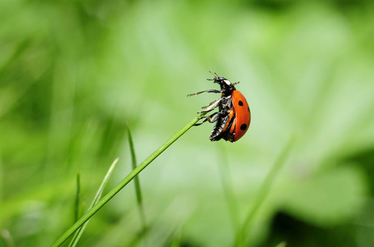 Ladybug and the beauty of nature
