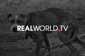 Real World TV